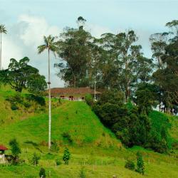 Quimbaya 107 hotels