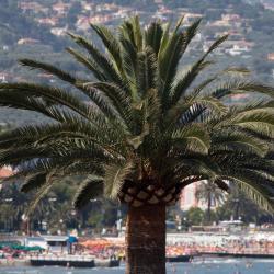 Marina d'Andora 76 hotel