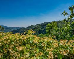 Locazione turistica Il Castagneto
