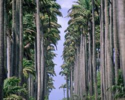 Le Palmier Argenté
