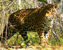 Pousada & Camping Santa Clara -Pantanal Sul