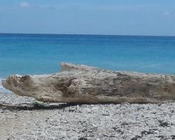 El Paraíso Perdido Beach Hotel