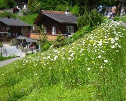 Ferienhaus Brienz