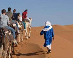 Camp Camel Tour Sahara