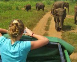 Ath Paura Safari Resort