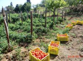 Tenuta Mauri - Agriturismo Vota, Nocera Terinese