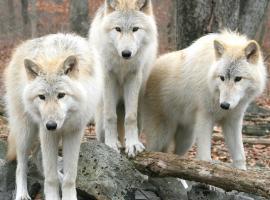 Gîte Les 3 Loups, Châtenois (рядом с городом Gironcourt-sur-Vraine)