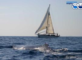 Ischia Dolphin Project