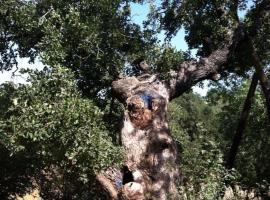 Oak Shade, Bet Leẖem HaGelilit