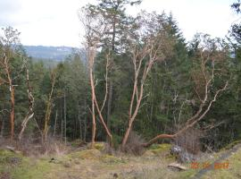 Happy Valley 3BD Retreat, Metchosin (Sooke yakınında)