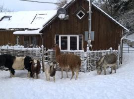 Funny-Farm, Sassen