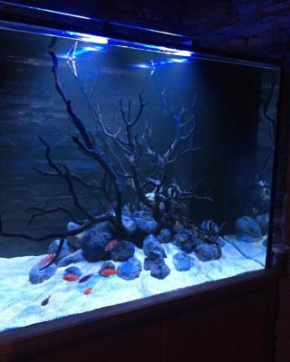 Aquarium House