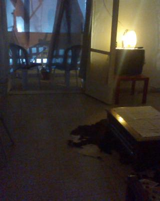 Bel Appartement Palestine