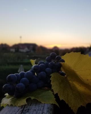 Pokoje Gościnne Pod Winogronami