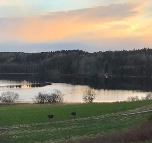 Dalsland - Sanna's Lodge