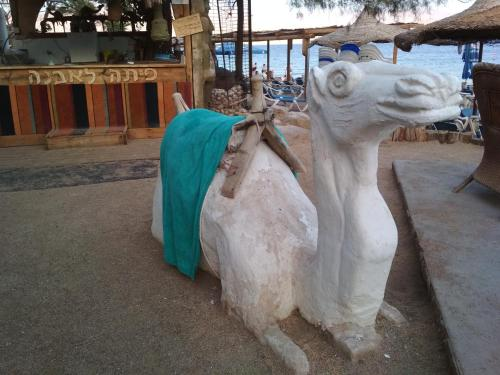 Rafi Bedouin Tent hostel