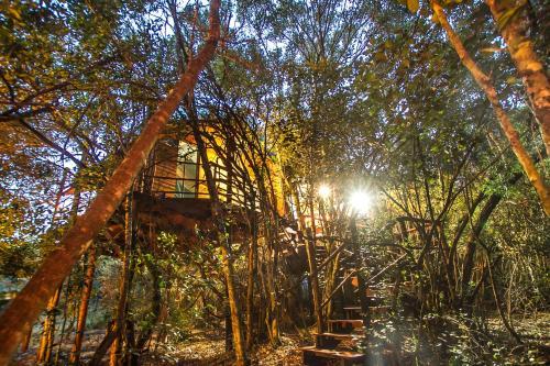 Teniqua Treetops