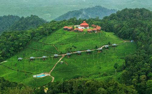 Wild Planet Jungle Resort