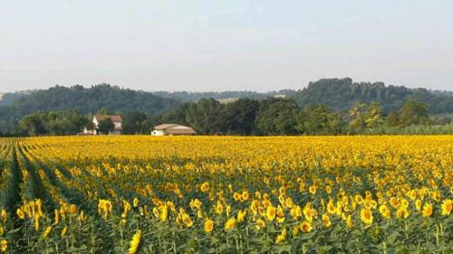 Azienda Agraria Alfieri
