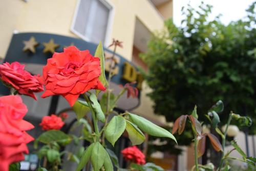 Eco-Hotel Edy
