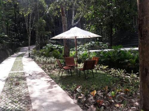 Wayanad Coffee Trail