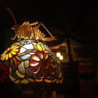 台東都蘭旅行蟲青年旅館