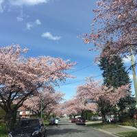 Burnaby Bed and Breakfast