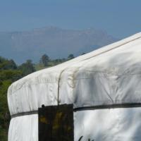 Yurtas Liquid Ambar