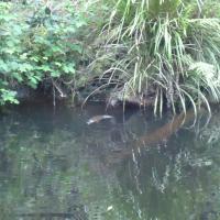 Platypus Ponds