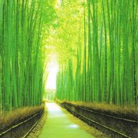 Japanese Cultural Experience Apartment in Bamboo Forest Fespa Kyoto