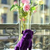 Purple Dog Suites