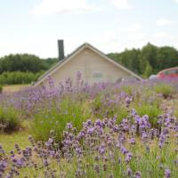 Lavender Village