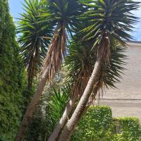 Apartamentos La casa del jardín en Santander