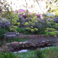 Frog Song at Willunga