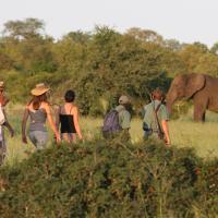 Rhino Walking Safaris