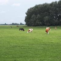 Edam, 20 minutes from Amsterdam