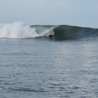 Vivir Surf and Fish