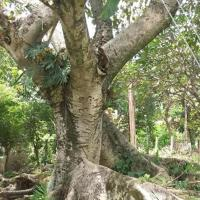 Sitio do Aconchego