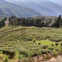 Tea View Homestay