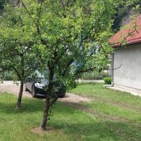 Home Šćepanović