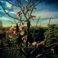 Roofgarden Roma