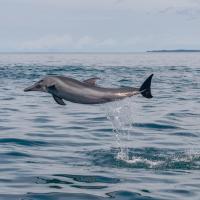 Dolphin Quest Costa Rica