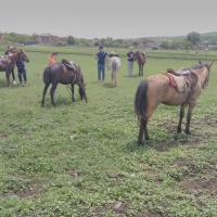 Horse riding and camping