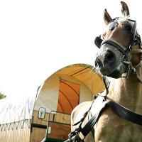 Wozy cygańskie-caravaning konny