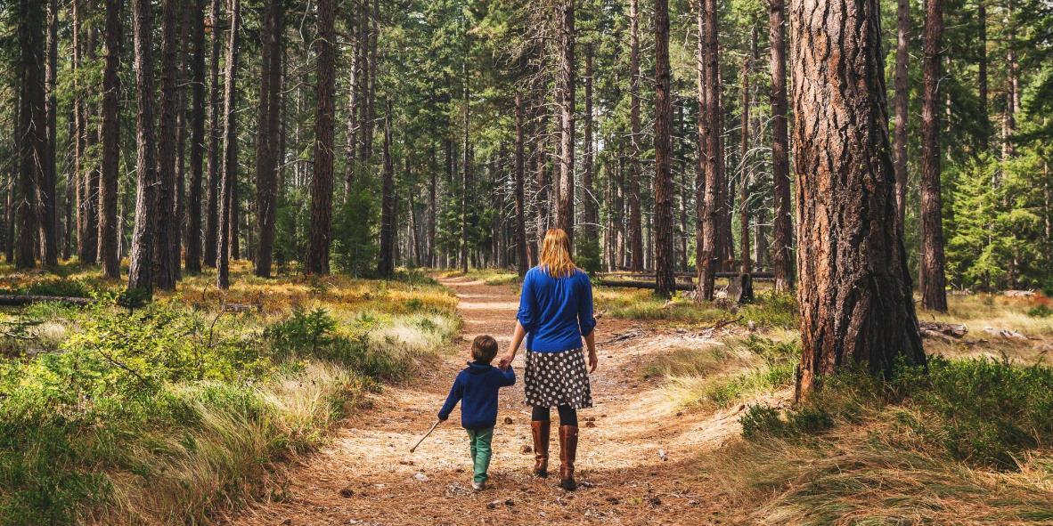 Forêt nationale d'Ocala