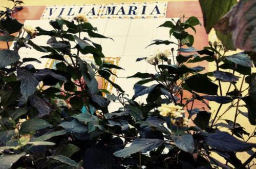 Villa Maria Arucas